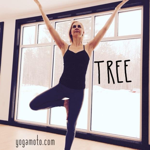 Malinda guest post Tree